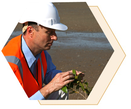 De la misma manera en que muchas industrias tienen participación en el medio ambiente... los ingenieros ambientales participan en muchas industrias. Los ingenieros ambientales trabajan para desarrollar soluciones para los problemas ambientales a través de la biología y la química. El aumento de la concientización sobre la salud pública está trasladando los esfuerzos cada vez más hacia la prevención de los problemas y por eso se espera que aumente la demanda de ingenieros ambientales. Existen oportunidades en muchos sectores ambientales relacionados con la investigación, el diseño, la planificación, la consultoría, el análisis y las regulaciones gubernamentales. Las altas concentraciones de compañías fabricantes de productos químicos y petroquímicos, los grandes recursos y suministros de agua, las instalaciones de aguas residuales, las instalaciones de administración de desechos sólidos y el incesante crecimiento del transporte terrestre, aéreo y marítimo continuarán dando lugar a una fuerte demanda de ingenieros ambientales en la región de la Costa del Golfo de México.